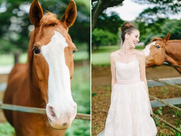 wpid32229-horse
