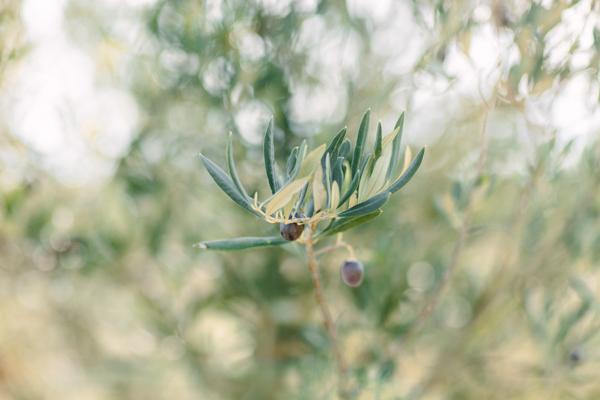 oliveiras-57